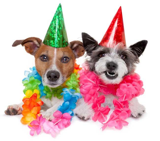 Send en sjov fødselsdagshilsen