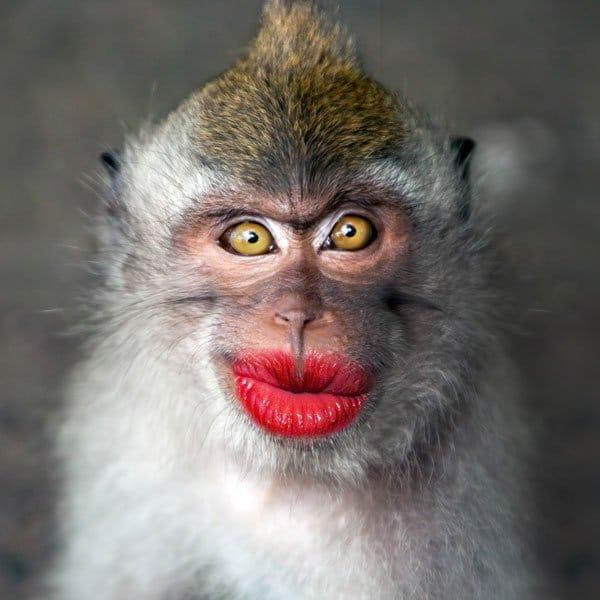 Meme Kiss And Makeup: Sjove Kort Spreder Glæde Og Store Smil